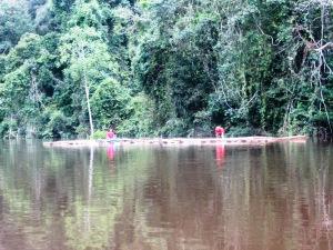 frumuseţi plutitoare