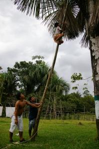 jorge palmier