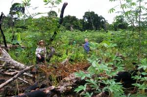 Agricultura de junglă