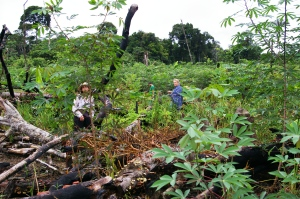 planting ayahuasca