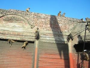 casa cu maimuţe