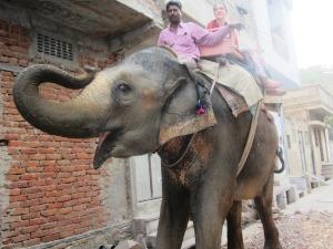 mahutul îşi conduce elefantul cu inima