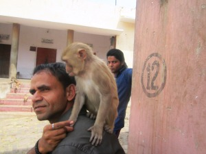 the monkey whisperer