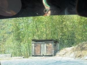 decor insolit în pădurile de bambus