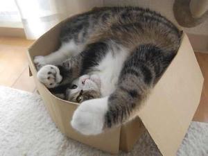 cutia ca loc de joacă