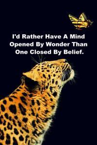 curiozitatea nu a omorât pe nimeni, nici măcar pisica