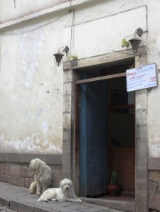 câinii de Cuzco
