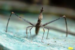 075 stick bug